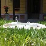 palacio patos